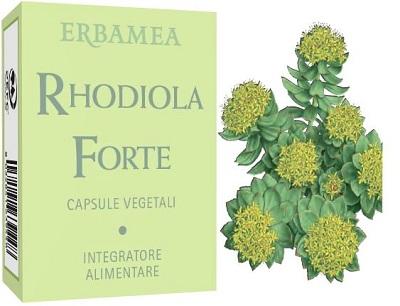RHODIOLA FORTE 24 CAPSULE
